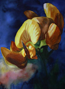gewöhnlicher Hornklee Anke Gruss Malerei Aquarell auf Papier
