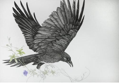 Seelenvögel (flowers) von Birgit Pleschberger (2018): Zeichnungen ...