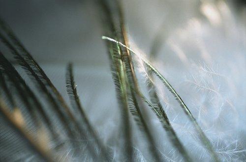 Les Fleurs du Ciel - 12 Claire Artemyz Photography Analogue on Paper