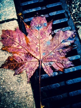 Leaf 24 Irmin Bernstaedt