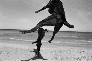 Two Dogs 16 Graeme Williams Photographie