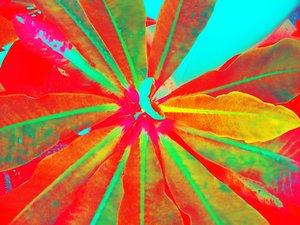 EXPLOSION (RED), 120 X 160 CM Tjaša Iris Photographie