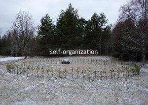 self-organization Rona Rangsch Photography Digital on Paper